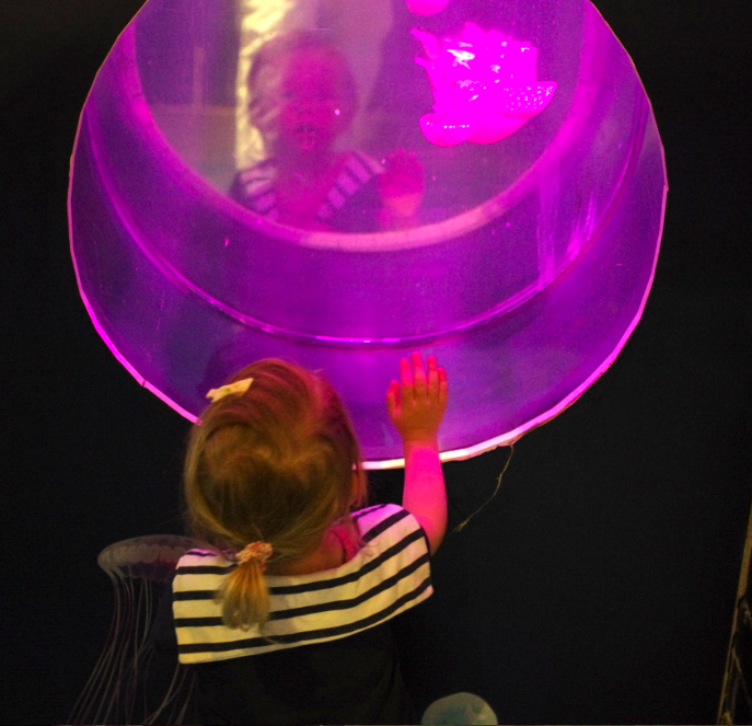 Colour changing Jelly Fish at SeaLife Brighton