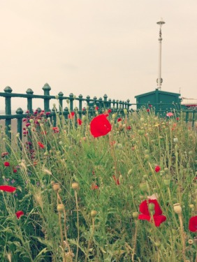 Hove wildflowers.jpg